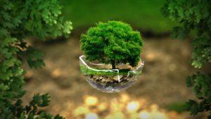 L'albero esempio di vita